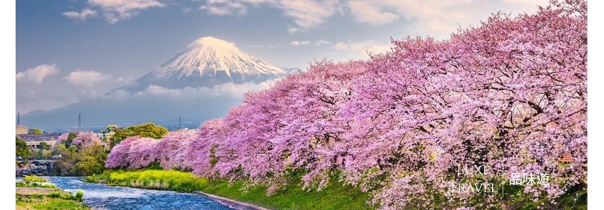 All Round Sakura Kanto Private Tour (6 Days 5 Nights), Kanto, Japan;