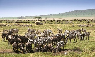 Wildbeast migration period in Tanzania is about to start! Plan your safari trip ahead!