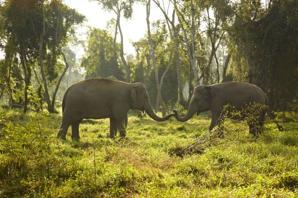 ANANTARA GOLDEN TRIANGLE ELEPHANT CAMP & RESORT Chiang Rai Thailand 泰國清萊 (flight ∙ hotel ∙ package ∙ cruise ∙ private tour ∙ business ∙ M.I.C.E ∙ Luxe Travel ∙ Luxury travel  ∙ Luxury holiday  ∙ Luxe Tour  ∙ 特色尊貴包團 ∙  商務旅遊 ∙  自由行套票 ∙滑雪  ∙ 溫泉 ∙ 品味假期 ∙ 品味遊)