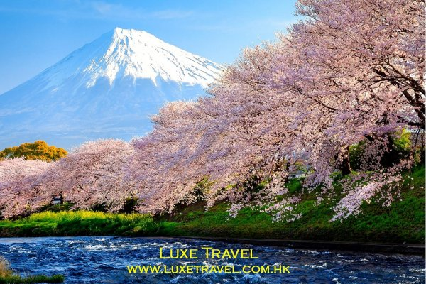 Cherry Blossom Japan 日本櫻花 (flight ∙ hotel ∙ package ∙ cruise ∙ private tour ∙ business ∙ M.I.C.E ∙ Luxe Travel ∙ Luxury travel  ∙ Luxury holiday  ∙ Luxe Tour  ∙ 特色尊貴包團 ∙  商務旅遊 ∙  自由行套票 ∙滑雪  ∙ 溫泉 ∙ 品味假期 ∙ 品味遊)