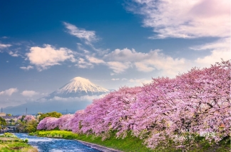 All Round Sakura Kanto Private Tour (6 Days 5 Nights), Kanto, Japan
