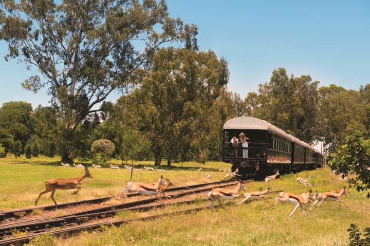 South Africa, Safari, Sabi Sand,  Kruger National Park,Grootbos,Cape Town,  Rovos Rail