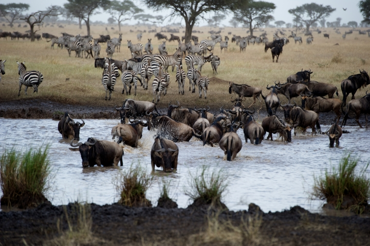 South Africa,  The great migration