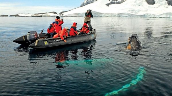 Lindblad Expeditions Antarctica南極船  (flight ∙ hotel ∙ package ∙ cruise ∙ private tour ∙ business ∙ M.I.C.E ∙ Luxe Travel ∙ Luxury travel  ∙ Luxury holiday  ∙ Luxe Tour  ∙ 特色尊貴包團 ∙  商務旅遊 ∙  自由行套票 ∙滑雪  ∙ 溫泉 ∙ 品味假期 ∙ 品味遊)