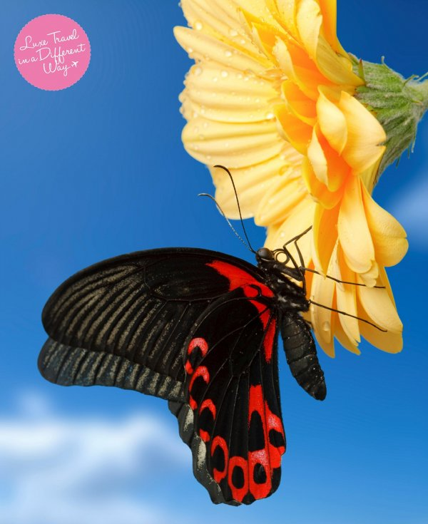 Discover migration of tropical birds & butterflies