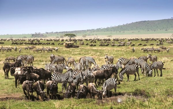 Wildbeast migration period in Tanzania is about to start! Plan your safari trip ahead! | Luxe Travel