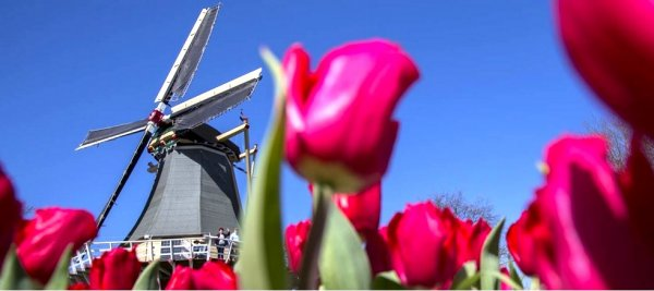 Experience Amsterdam in Bloom | LUXE TRAVEL