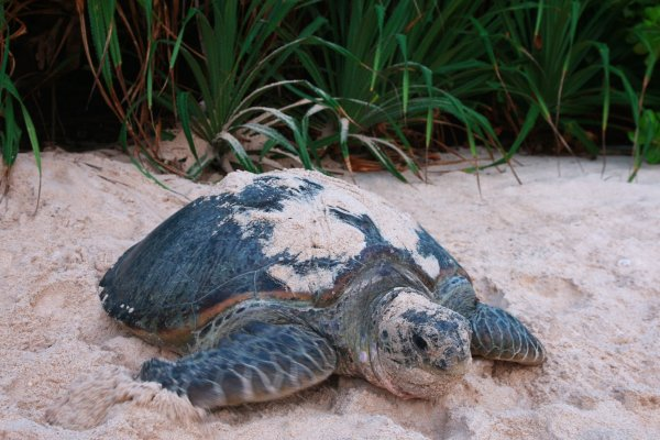 SPECIAL TURTLE SEASON OFFER FOR LUXE TRAVEL INSIDERS*