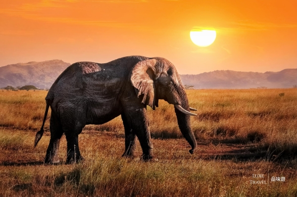 Fun Fact of African Elephants! – Tanzania, Africa