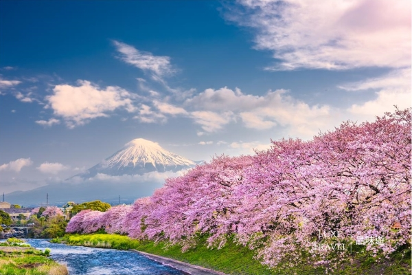 New Time Limited Luxe Journey ! Enjoy All Round Sakura Journey in Kanto Japan