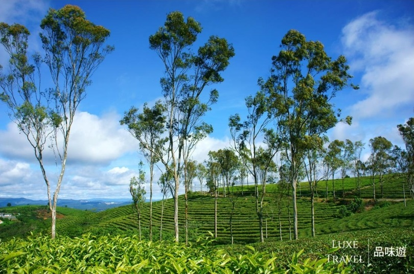 Tea platation of Dalat